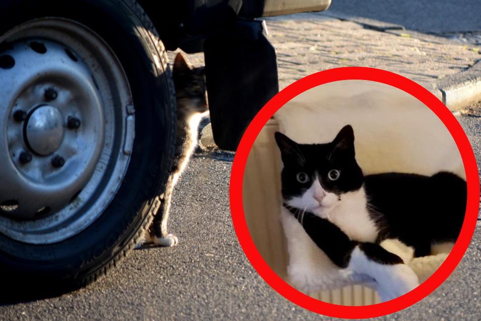 Dramatische Rettungsaktion: Kätzchen bleibt in Radkasten von Auto stecken