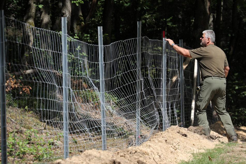 Afrikanische Schweinepest: Bayern rüstet sich gegen die Seuche