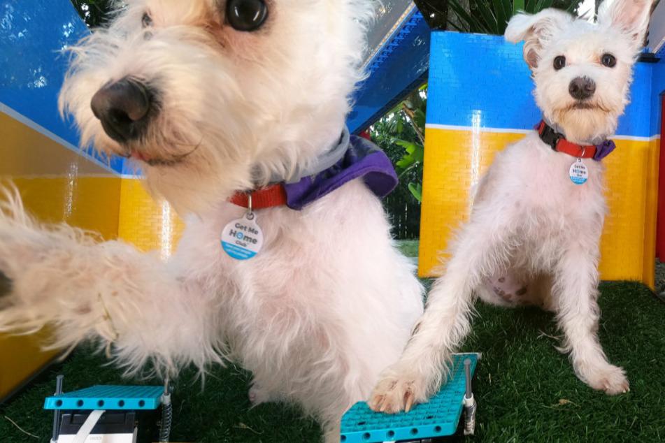 Unglaublich, aber wahr! Hund geht in eine Fotobox und macht Selfies