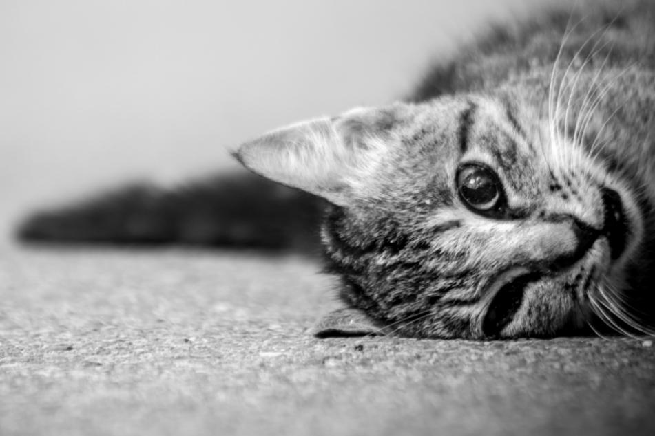 Katzen aus Auto geworfen und eine absichtlich überfahren? Horror-Tat sorgt für Entsetzen!