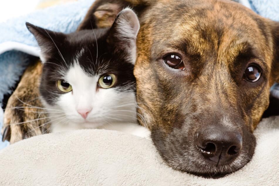 Sind Hund oder Katze krank, solltest Du Dich immer an einen Tierarzt wenden. (Symbolbild)