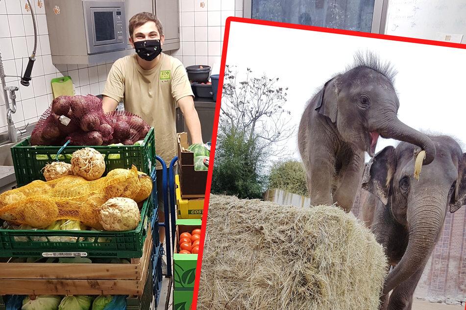 Wer den Zoo unterstützen möchte, kann zum Beispiel den Elefanten symbolisch ein paar Bananen zukommen lassen.