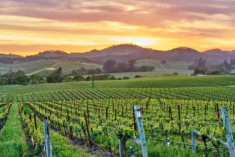 Will you accept this rosé? California winery will pay you $10,000 a month to live on its vineyard