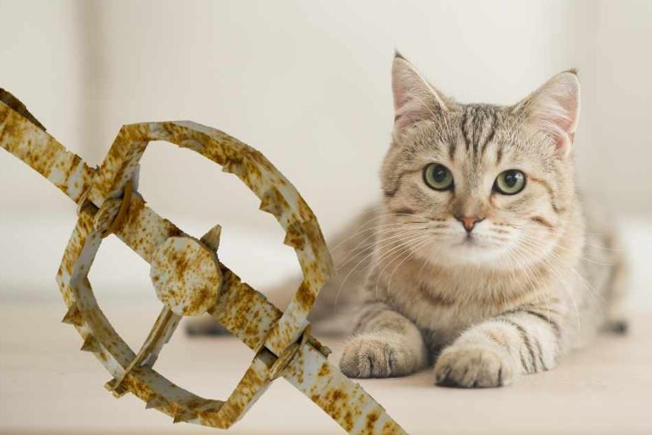 Die Katze tappte in eine Bärenfalle (Symbolbild).
