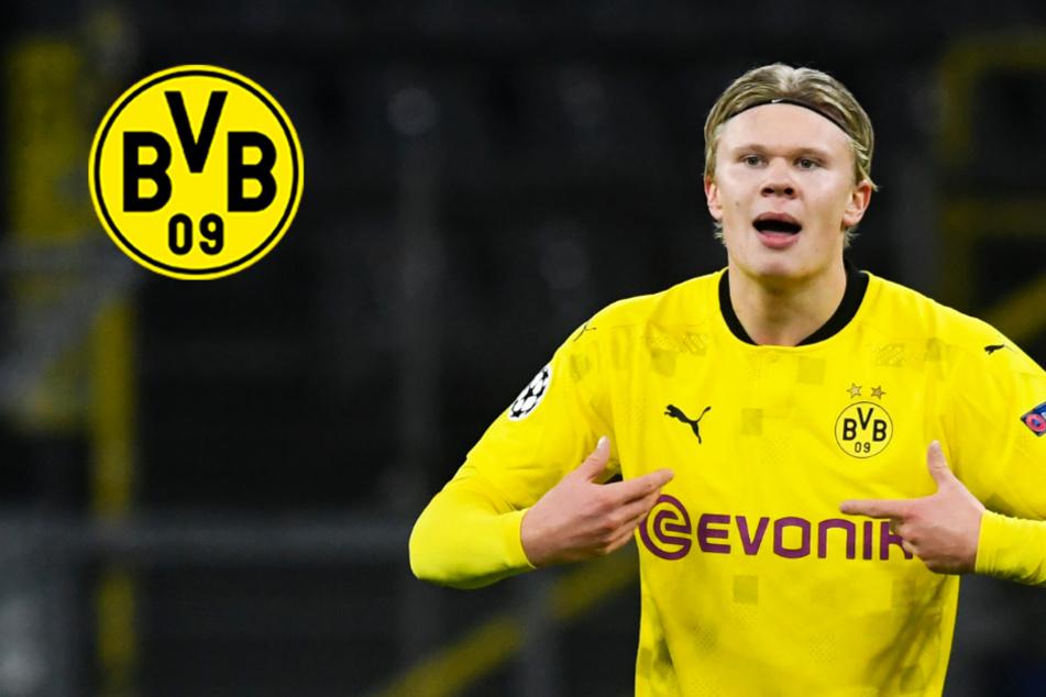 BVB-Phänomen Haaland weiter in bestechender Form! Dortmund lässt Brügge keine Chance