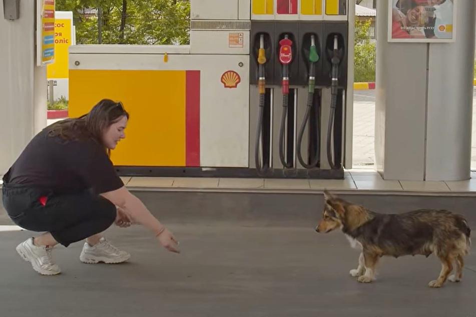 Anwohnerin Alena kannte diese Hunde-Dame schon eine Weile.
