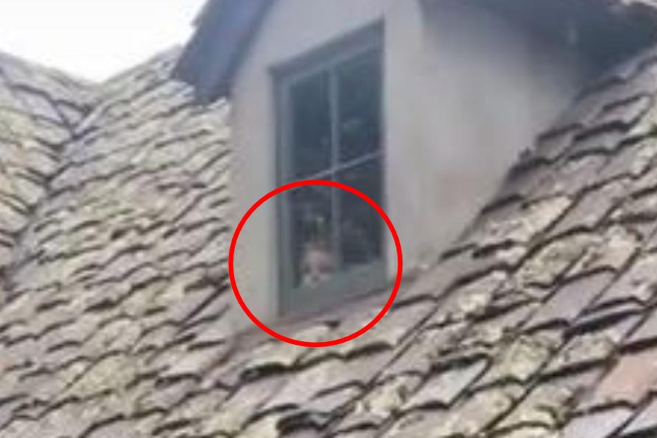 Ein Blick in dieses Fenster lehrte Rebecca und viele andere das Fürchten.