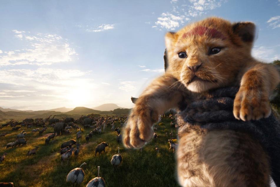 """""""Der König der Löwen"""" bekommt einen zweiten Teil! Oscar-Preisträger führt Regie"""