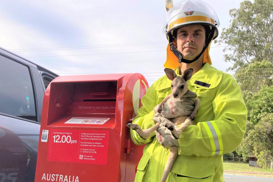 Nach seinem unschönen Ausflug in einen Briefkasten geht es dem süßen Jungtier offensichtlich wieder gut.