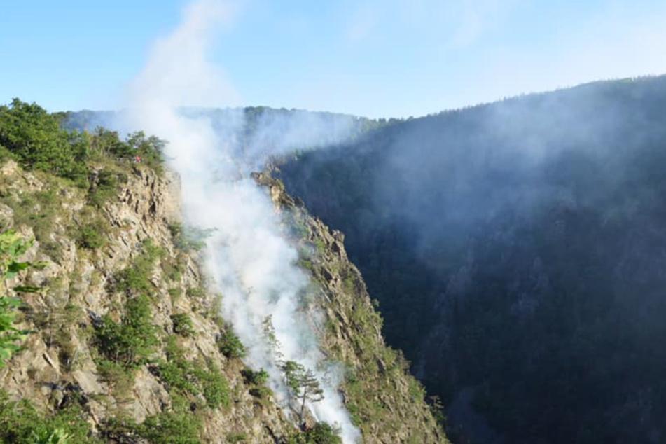 Rauchschwaden ziehen über den Hang an der Roßtrappe.