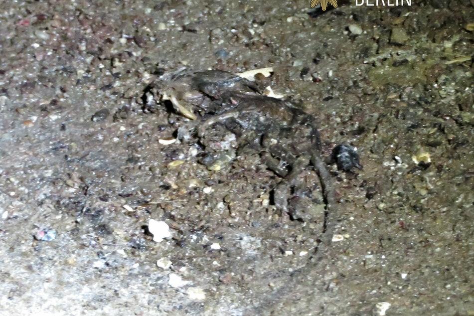 Es lagen überall tote Tiere.