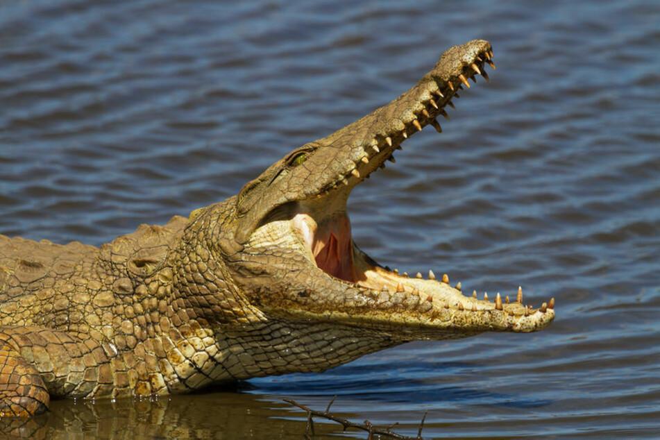 Das vermeintliche Unstrut-Krokodil konnte bislang nicht gefunden werden (Symbolbild).