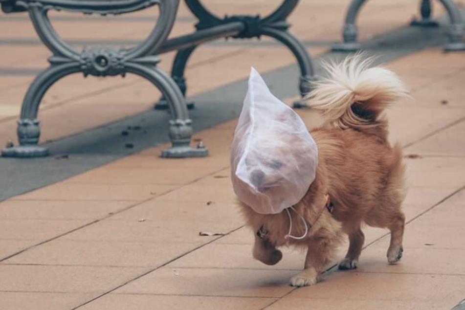 Das Bild vom Hund mit der Tüte über dem Kopf sorgte im Internet für entsetze Kommentare.