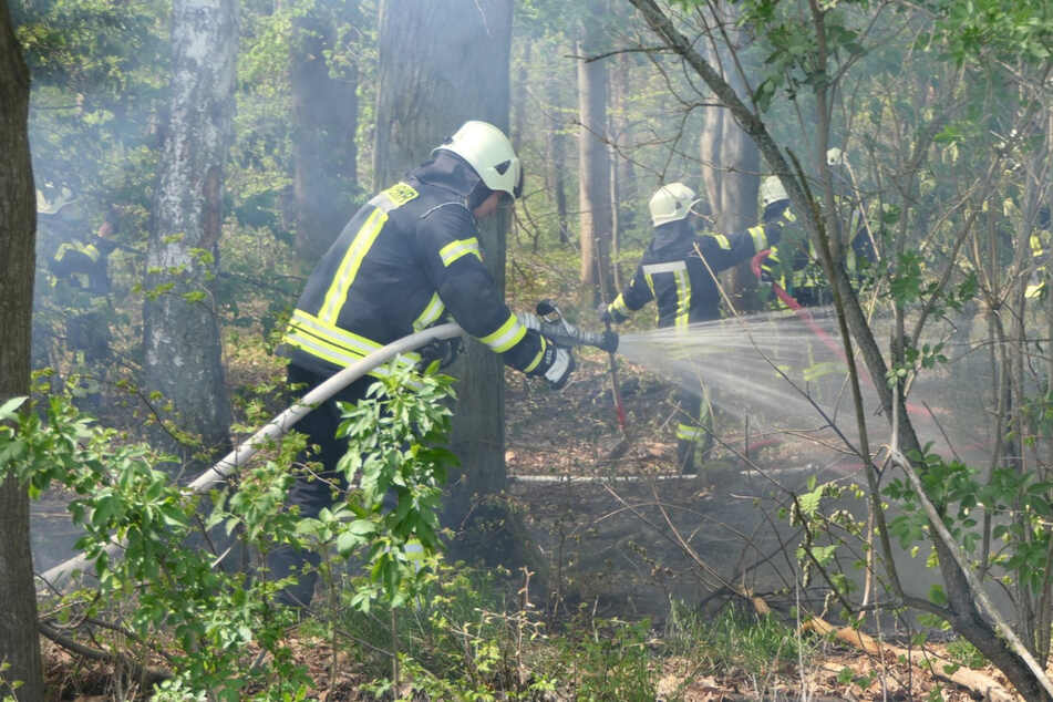 Im Waldbardauer Forst bei Grimma löschen Feuerwehrleute einen Waldbrand. Ein Spaziergänger erlitt eine leichte Rauchgasvergiftung.