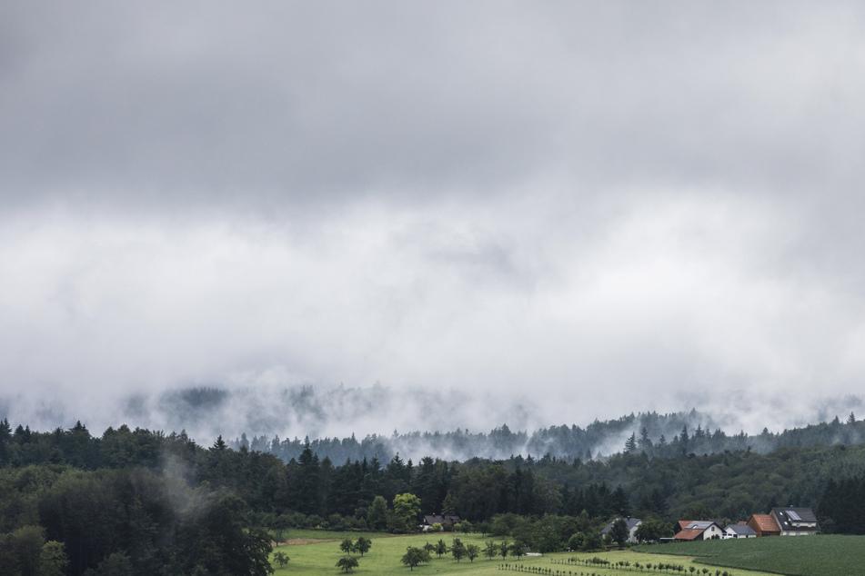Nebelschwaden steigen aus einem Wald auf. In der Nacht zum Mittwoch kam es durch Unwetter zu umgestürzten Bäumen und überfluteten Straßen.