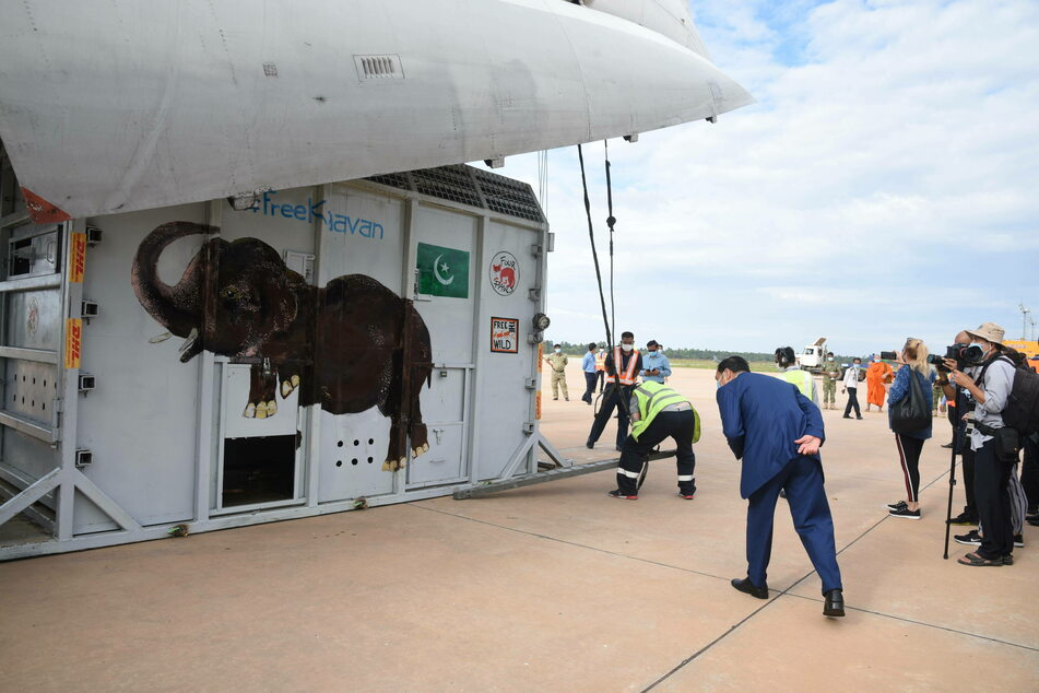 Kaavan arrived in Cambodia by a chartered cargo plane Monday afternoon after spending nearly 35 years in an Islamabad zoo under grim conditions.