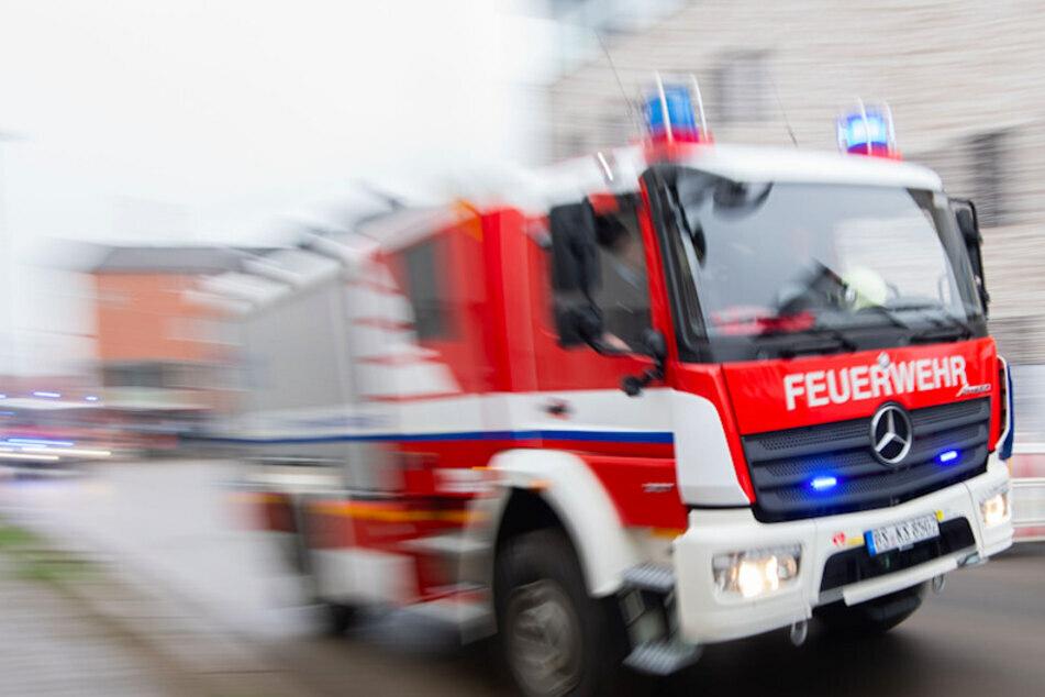 Hunde-Rettung: Feuerwehr befreit unter Straßenbahn eingeklemmten Bernhardiner