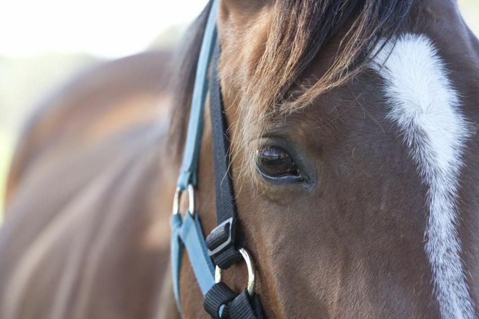 Blindes Pferd wird aufgeschreckt und verletzt sich bei der Flucht