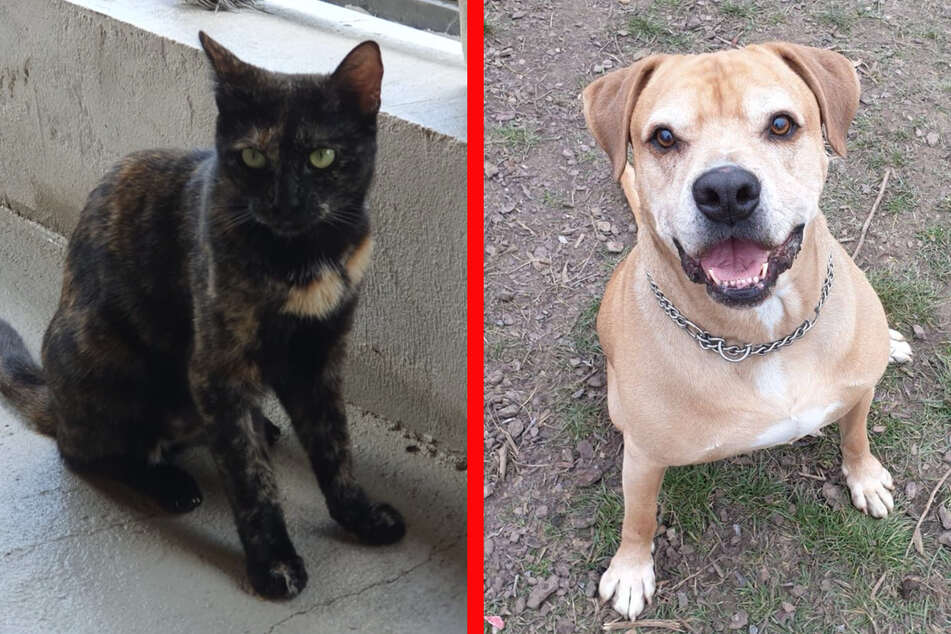 """""""Kuscheltiere"""" bedeuten Verantwortung: Anschaffung von Haustieren sollte gut überlegt sein"""