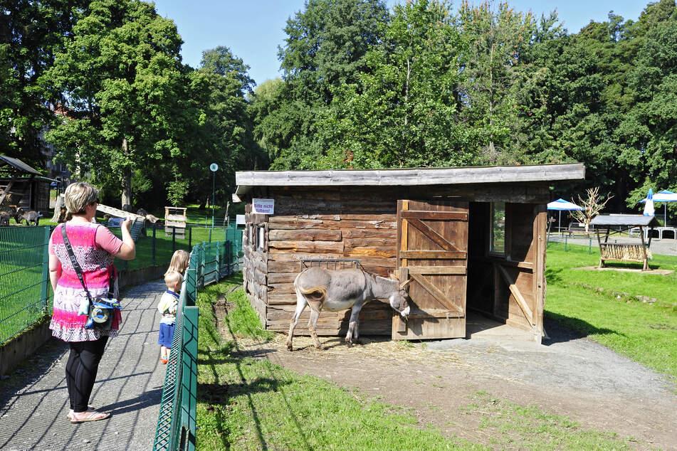 Das Eselgehege ist ein besonderer Anziehungspunkt für Besucher.