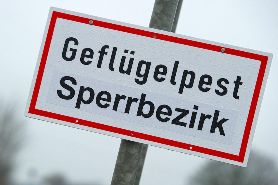 Geflügelpest in Bayern ausgebrochen! Ab sofort Stallpflicht für alle Vögel