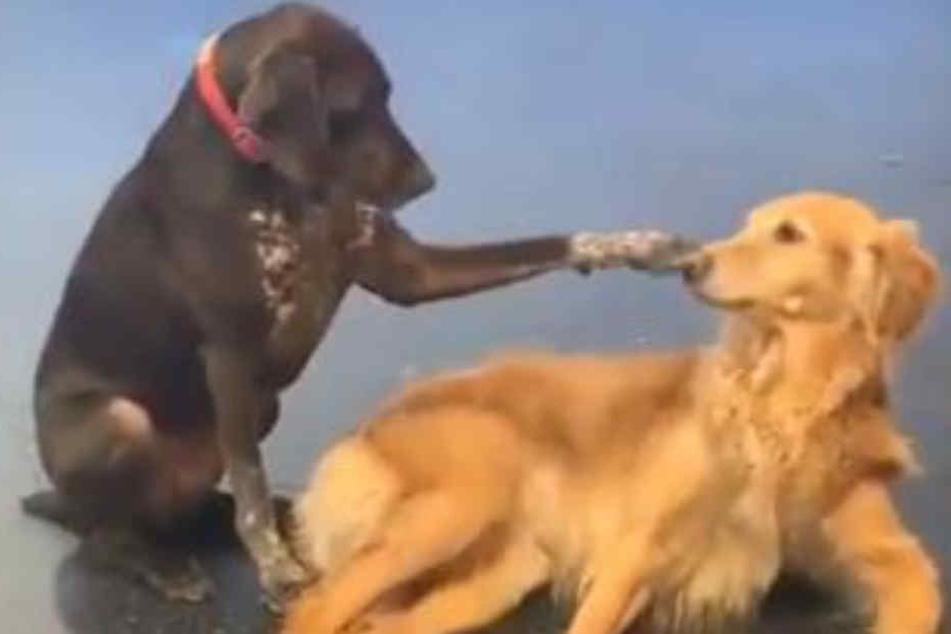 Hund bricht auf der Suche nach neuen Freunden allen das Herz