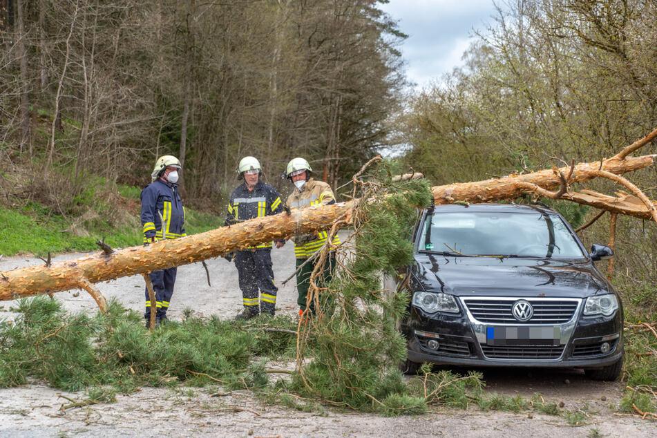 Kameraden der Feuerwehr zerschneiden den auf dem VW-Passat liegenden Nadelbaum.