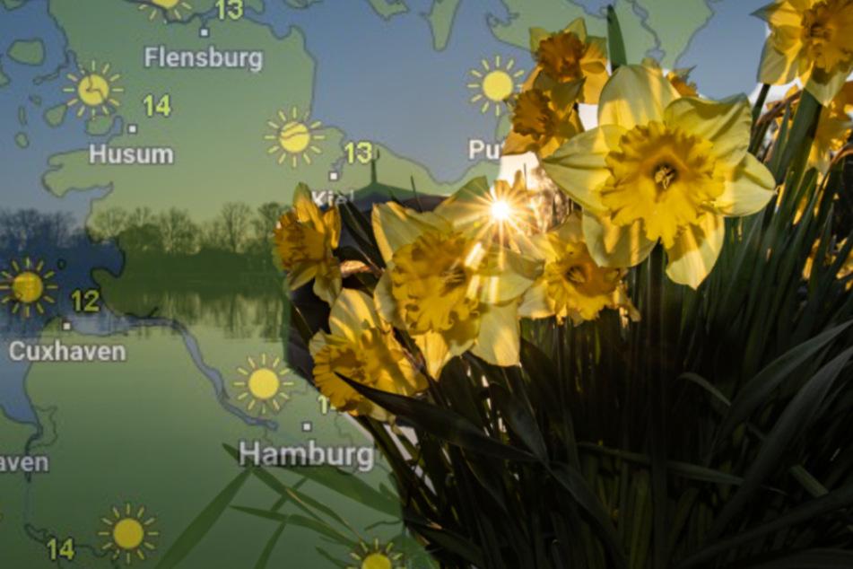 Sonniger Wochenstart: So wird das Wetter im Norden!