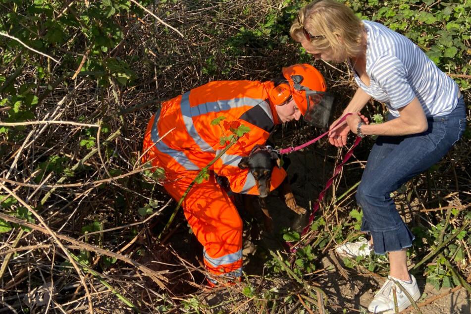 """Bei Spaziergang verschwunden: Feuerwehr rettet Hund """"Milou"""""""