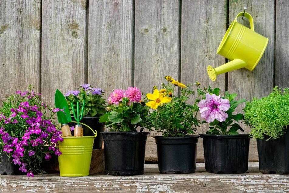 Pflanzen gießen im Urlaub muss nicht immer der Nachbar. DiY ist hier angesagt.