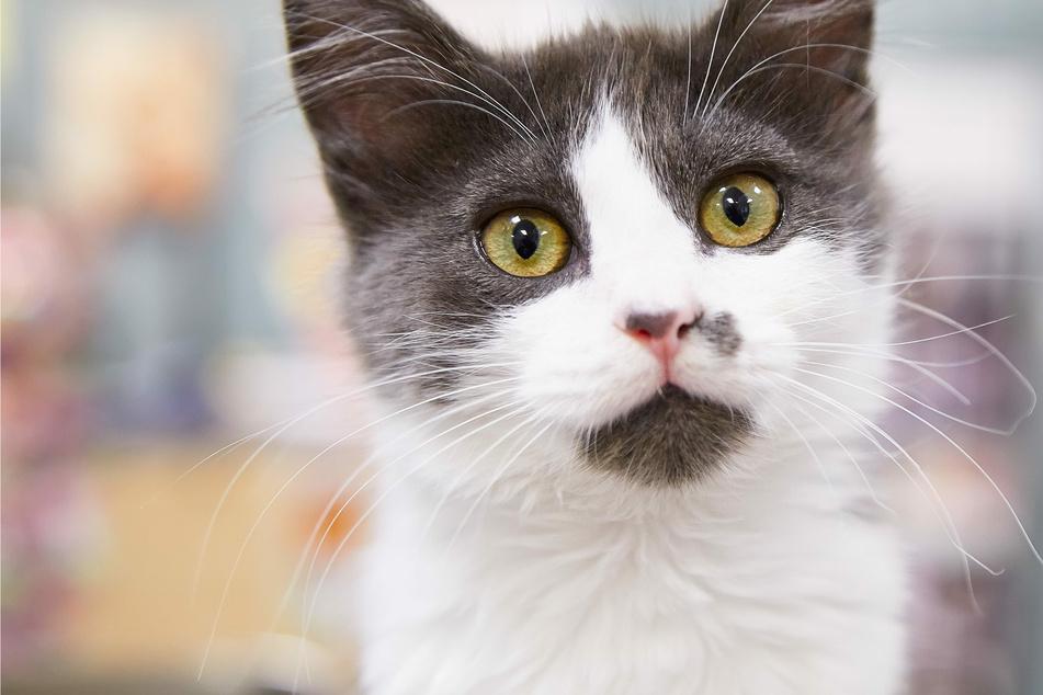 Schlaue Samtpfote: Familie sperrt sich aus, Katze wird zum Helden
