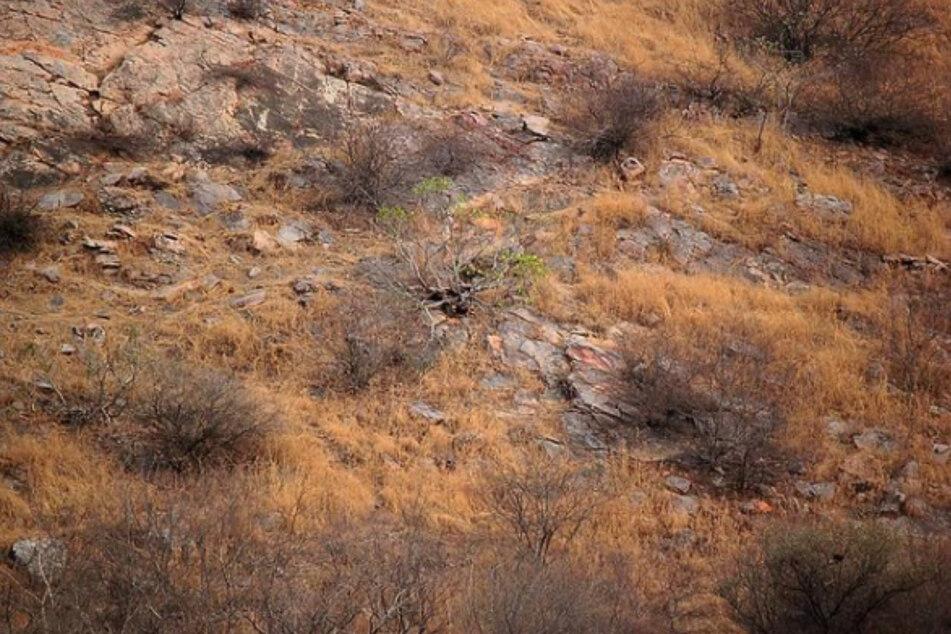 Na, wer erkennt hier einen Leoparden? Tipp: Ranzoomen.