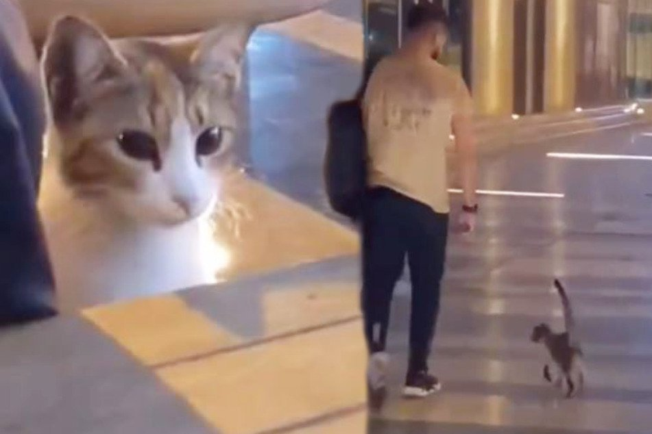 Stray cat follows man to his car and finds her forever home!
