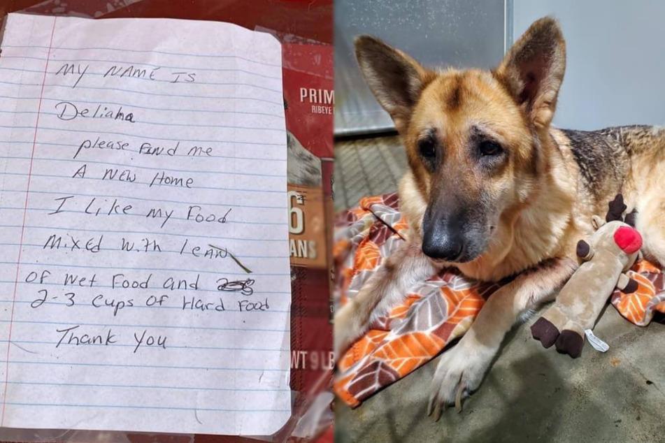 Hund sitzt einsam vor Tierheim: Der Brief, den er dabei hat, geht allen ans Herz