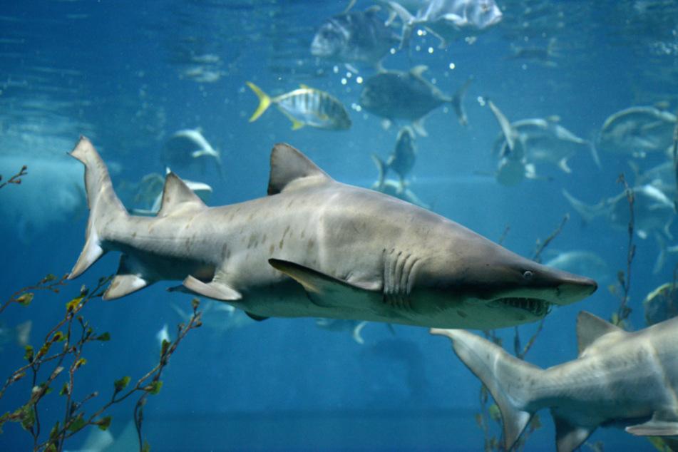 Margot Eddy saved her husband from a bull shark.
