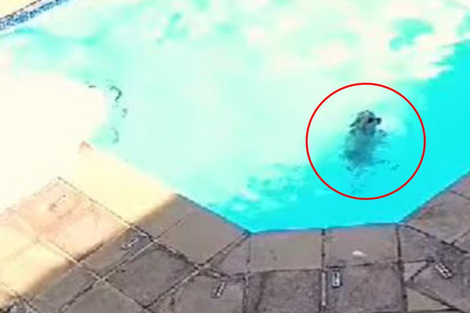 Besitzer sind sprachlos, als sie in Video sehen, wie ihr Hund vorm Ertrinken gerettet wurde