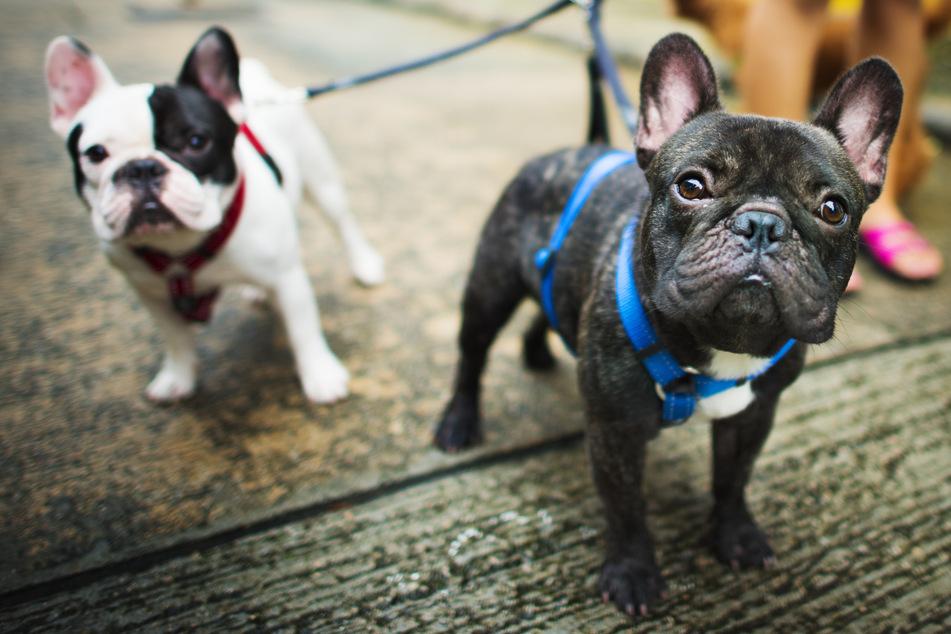 Hund, Katze und Co. wegen Corona-Einsamkeit zugelegt? Darauf solltet Ihr achten
