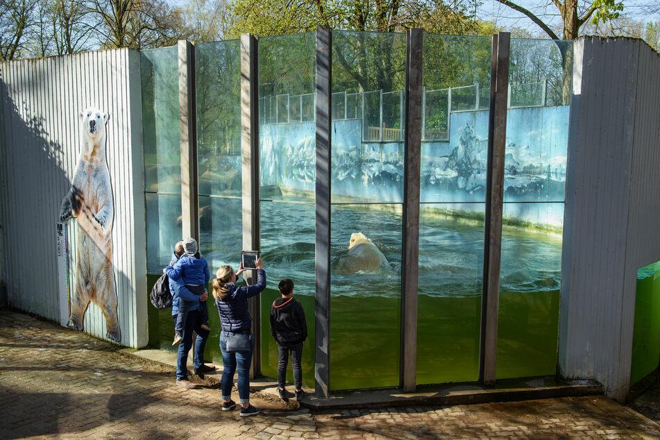 Zoos, Wildparks, Gartenbaucenter und Blumenläden sollen in Schleswig-Holstein zum 1. März öffnen können.