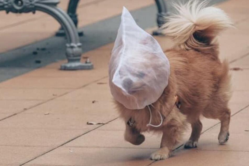 Foto von Hund mit Tüte über Kopf schockt das Netz
