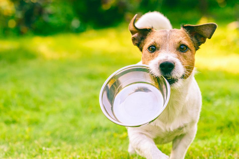 10 Dinge, die Dein Hund auf keinen Fall fressen sollte