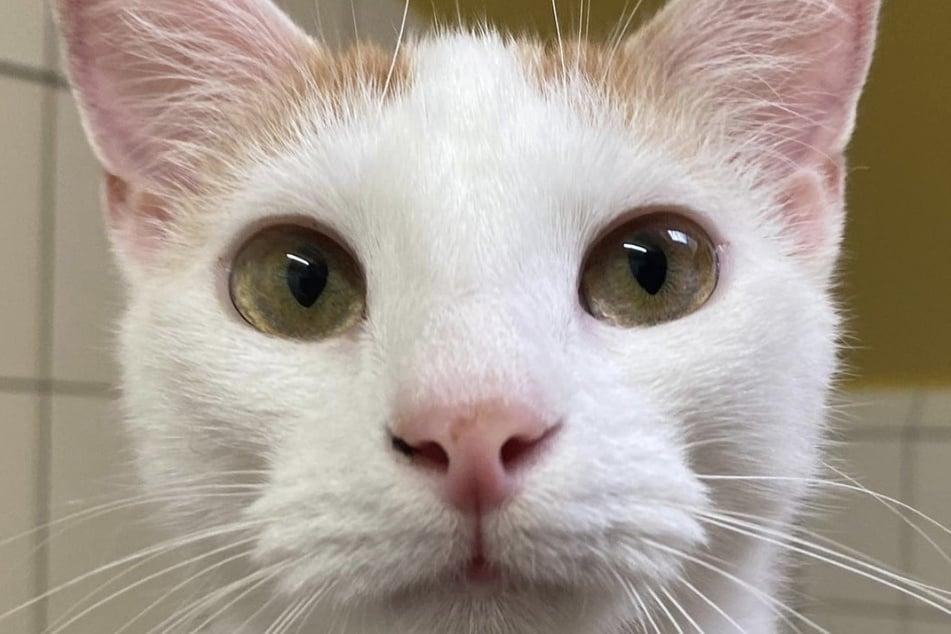 Katze Hazel durfte nicht mehr bei ihrer Familie bleiben, da sie offenbar unsauber gewesen sein soll und nicht in ihre Katzen-Toilette pinkelte. Jetzt wohnt sie im Tierheim.