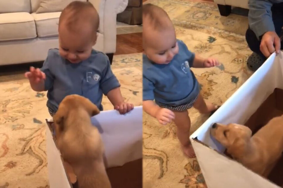 Toddler gets a puppy for his first birthday and his reaction is priceless