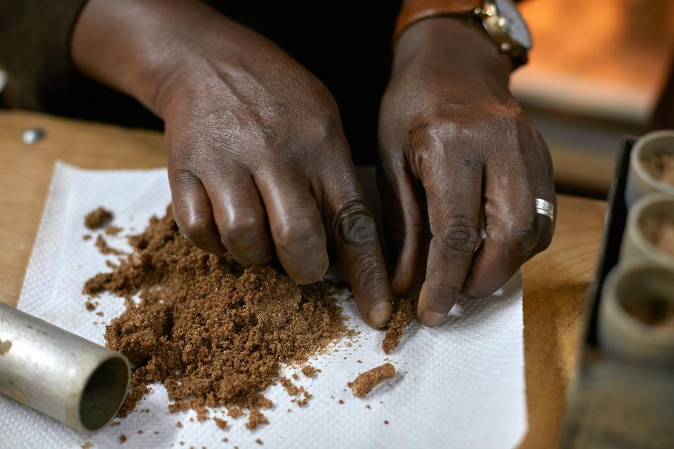 Ein ICIPE-Mitarbeiter zeigt auf Hülsen, in denen Wüstenheuschrecken in feuchtem Sand ihre Eier legen.