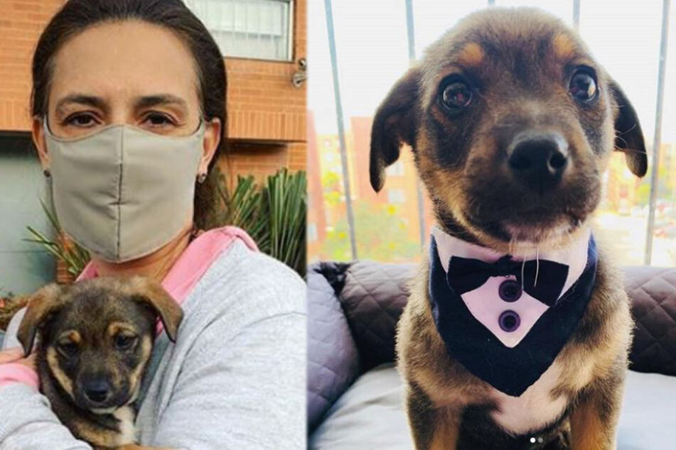 All dressed up and no place to go: puppy in tux stood up by new owner