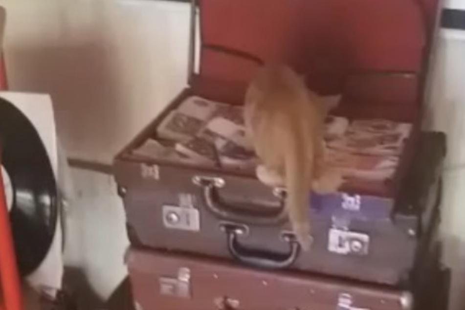 Auf frischer Tat ertappt: Kriminelle Katze versucht, Geld aus einer Bar zu stehlen!