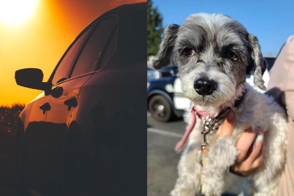 Mann lässt seinen Hund bei 54 Grad Celsius im Auto zurück