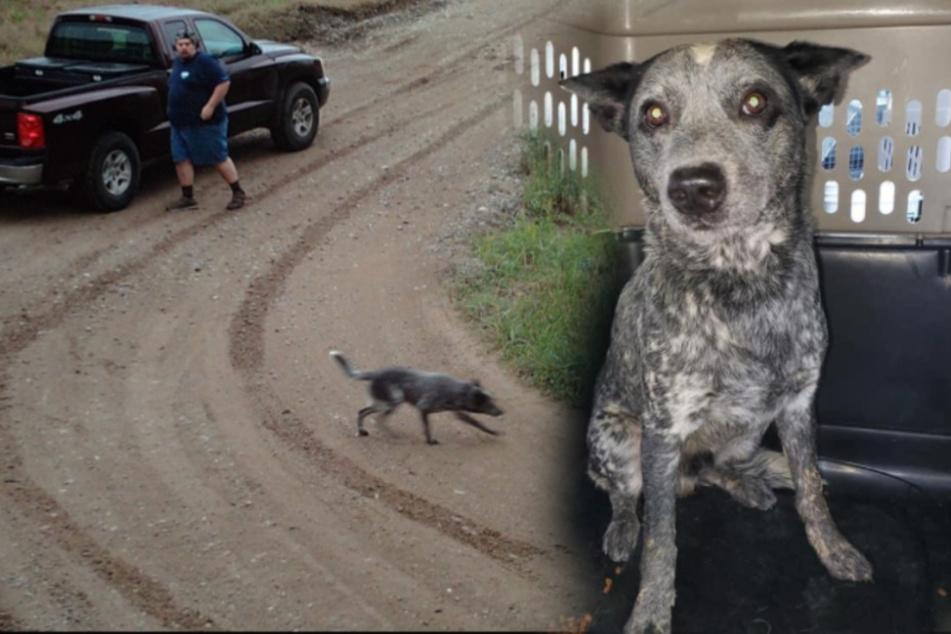 Mann setzt seinen Hund aus, Vierbeiner wartet vergebens auf seine Rückkehr
