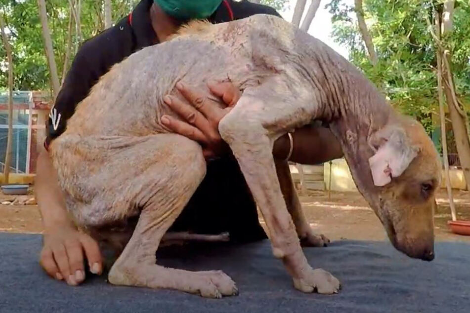 Tierschützer sind entsetzt, als sie diesen Hund sehen, doch heute ist er nicht wiederzuerkennen
