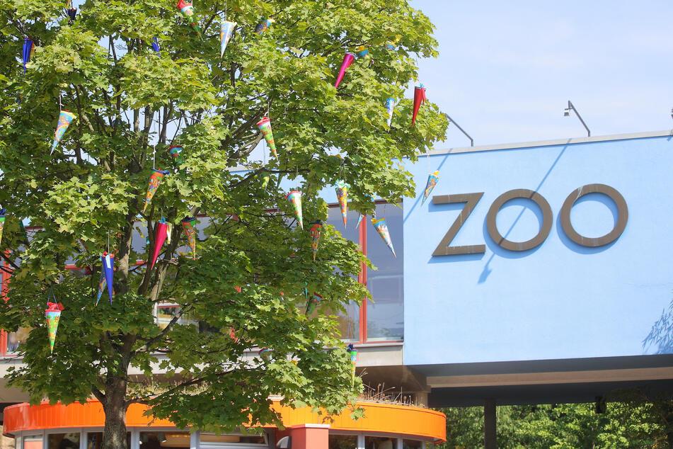 """Das traditionelle Zuckertütenfest im Dresdner Zoo wird Corona-bedingt nur deutlich """"abgespeckt"""" stattfinden können."""