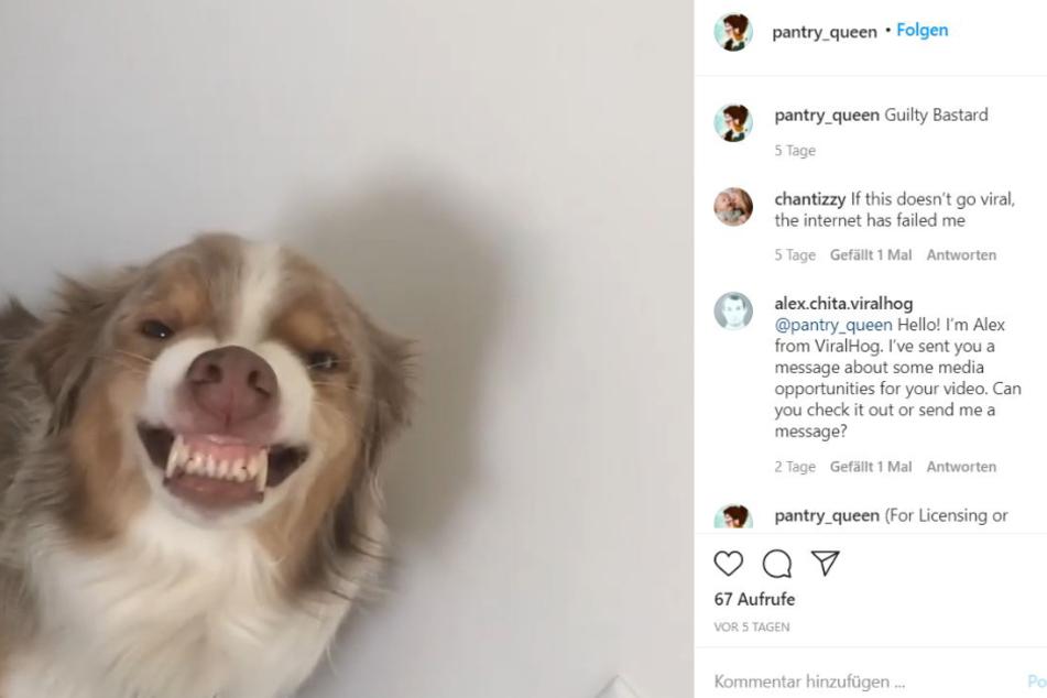 Grinst dieser Hund oder fletscht er die Zähne?